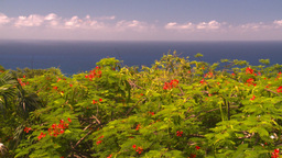 HD2008-8-15-45 StThomas trees ocean Stock Video Footage