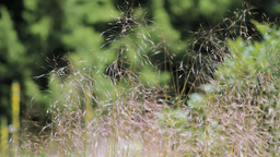 Wild Plant Stock Video Footage