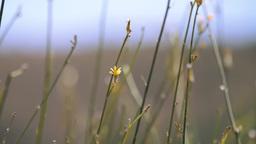 Wild Plant Stems Footage