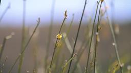 Wild Plant Stems Stock Video Footage