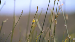 Wild Plant Stems Stock Video Footage