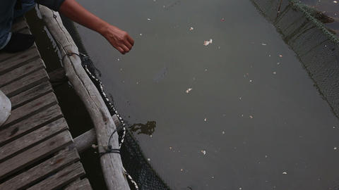 fish water jet knocks feed Live Action