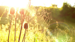 Cobwebs in the Meadow and Shining Sun Footage