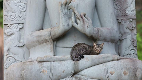cat sitting on the statue of a Buddha Stock Video Footage