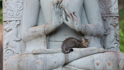 cat sitting on the statue of a Buddha Footage
