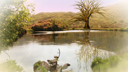 Tree Growing Fast in a landscape Footage