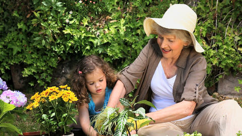 Grandmother and her granddaughter gardening Footage