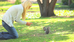 Young woman feeding a squirrel Footage