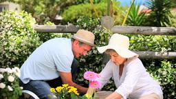 Senior couple planting flowers Footage