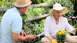 Retired Couple With Hats Doing Some Gardening stock footage