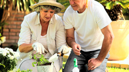 Retired Couple Potting Plants stock footage