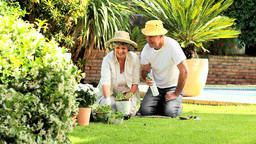 Retired Couple Working In Garden stock footage