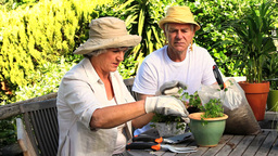 Mature couple potting herbs in the garden Footage