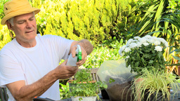 Man spraying potted plants in his garden Footage