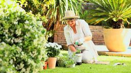Retired Woman Working In Her Garden stock footage