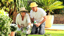 Retired Couple Gardening stock footage