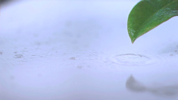 Rain on a leaf in super slow motion Footage