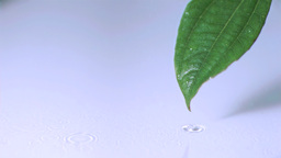 Drizzle on leaf in super slow motion Live Action