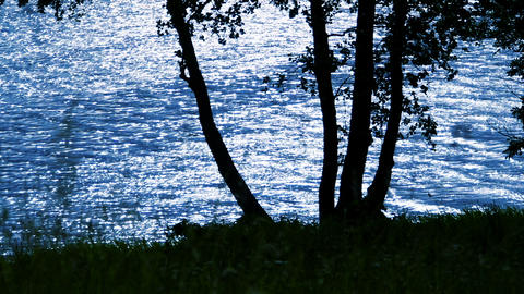 Tree On A Background Of Water In Beautiful Weather stock footage