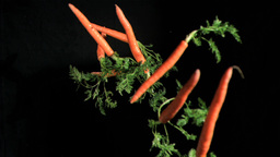 Many carrots in super slow motion coming up Footage