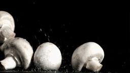 Mushrooms in super slow motion receiving water Footage