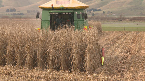 maize harvester at end of row and turn Stock Video Footage