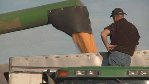 corn into bin Stock Video Footage