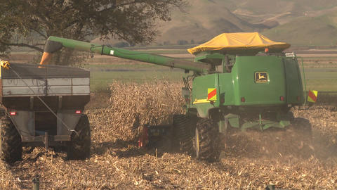 corn harvesting Stock Video Footage
