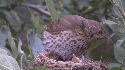 bird settles on nest Stock Video Footage