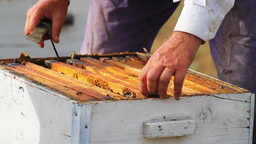 Honeycombs Stock Video Footage
