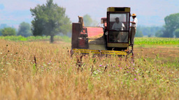 Rye Harvest Stock Video Footage