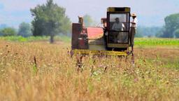 Rye Harvest Footage