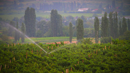 Vineyard Stock Video Footage