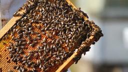 Honeycomb Stock Video Footage