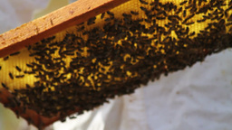 Honeycombs Footage