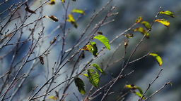 Bare Tree Branches Stock Video Footage