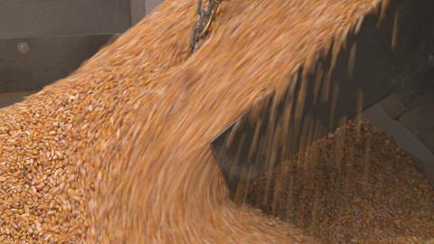 corn flows throu gate into hopper Stock Video Footage