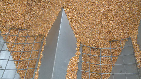 maize flows through wide hopper Stock Video Footage