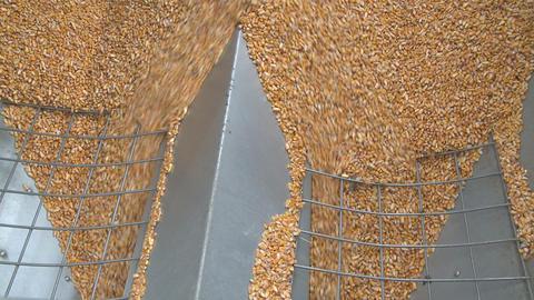 maize flows through wide hopper Stock Video Footage