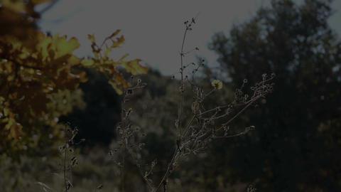 Morning light Stock Video Footage
