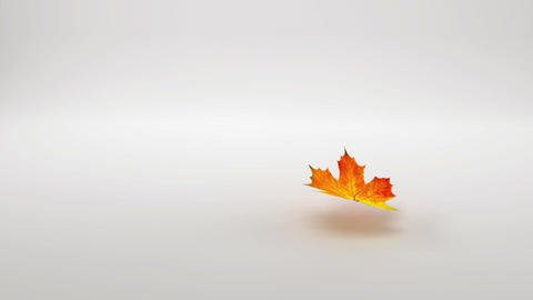 Leaf falling Stock Video Footage
