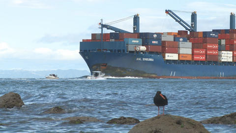 oyster catcher bird and container ship Stock Video Footage