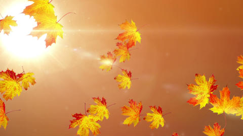 Falling leaves, Stock Animation