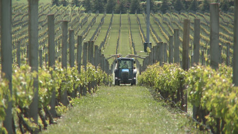 spraying grapes Stock Video Footage