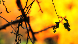 Autumn Abstract Stock Video Footage