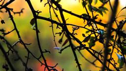 Autumn Abstract Footage