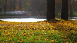 Autumn Scenery Footage