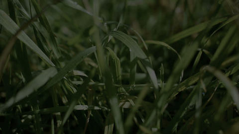 Grass after the rain Stock Video Footage