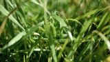 Grass After The Rain. stock footage