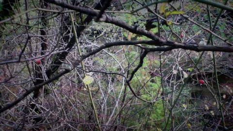 Forest after the rain Stock Video Footage